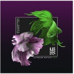 [Free] The Upbeats & Shapeshifter — Solitaire (Ulterior Motive Remix)